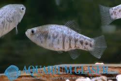 04-0-Copr_2019-Aquarium_Glasert.jpg
