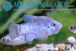 11-0-Copr_2019-Aquarium_Glasert.jpg